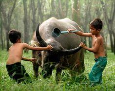 Série de fotos tocante mostra a amizade de dois garotos e seus búfalos gigantes - Ambientalistas em rede
