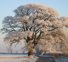 Frosty Morning by Vicky