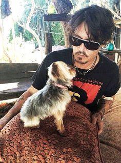 Johnny Depp and Pistol   #kutya #dog #yorkshireterrier #terrier #yorkshire #yorkie #australia #johnnydepp #amberheard
