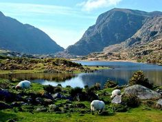 Killarney National Park, Co.Kerry is home to some of Ireland's finest natural beauty.