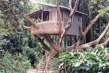 "Treehouse in , Puerto Rico. ""Make this YOUR next adventure"" Our Flamboyan tree was  planted 30 years ago for this purpose.  It beckons you to ascend into it's arms  and be enveloped by a private botanical ecosystem with fruits and flowers, frogs and birds.  This is truly a t..."