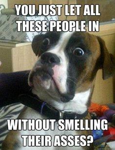 Animals: Funny pets - PelFind