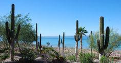 Cactus view Costa Baja Resort 2013
