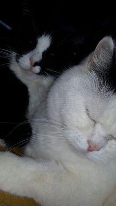 Grom en Pet