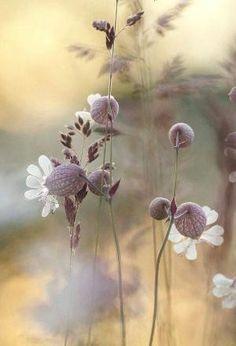 Bokeh flowers ✿⊱╮ by VoyageVisuelle