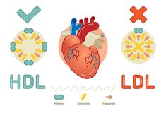 Cholesterol Guidelines: What Is Cholesterol And How Does It Impact You? Cholesterol Guidelines: What Is Cholesterol And How Does It Impact You? Cholesterol Guidelines, High Cholesterol Foods, What Is Cholesterol, High Cholesterol Levels, Sage Benefits, Fenugreek Benefits, Keto Benefits, Health Benefits, Health Tips