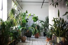 Love this sneak peek brought to you by Design Sponge. White, nude walls plus overload of plants? Obviously my dream space. My poor sister is currently living in an overwhelming room full of my plants. Interior Plants, Interior And Exterior, Interior Design, Indoor Garden, Indoor Plants, Loft Design, House Design, Decoration Plante, Balcony Decoration