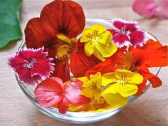 Cata de flores, flores comestibles en cocina