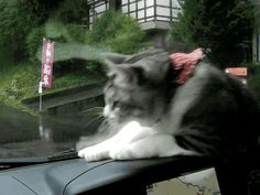 This cat who can't comprehend why she can't claw the window wipers. | 28 Cats Having A Way Worse Day Than You