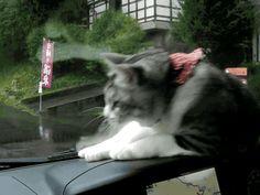 猫GIFくださいも : 〓 ねこメモ 〓