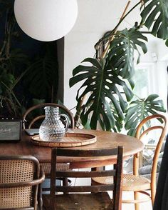 Cool table and chairs. Very relaxing. Nice touch with the plant too