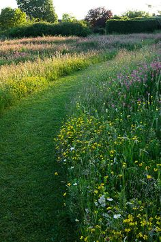 ?edging the lawn with wildflowers...to attract the bees and butterflies, cover the bare patches and soften the edges