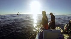 GoPro HD: Great White Shark Experience with Rob Lawrence