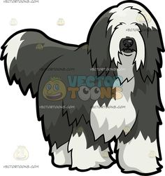 A Shaggy Bearded Collie Dog :  A dog with dark gray and white long fur black nose wags its tail while looking ahead  The post A Shaggy Bearded Collie Dog appeared first on VectorToons.com.  #clipart #vector #cartoon