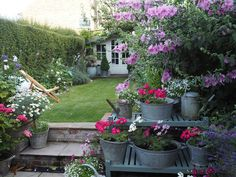 Cottage garden galvanised tubs flowers english Roses and Rolltops : A Summer Garden Update...