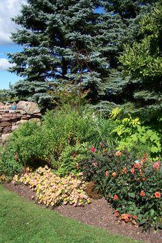 Sarah's Garden Aug 28 2014
