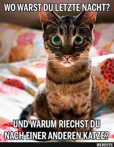 Tag for cute kitten pictures with funny captions : cute kittens dump Funny Cat Fails, Funny Cat Compilation, Funny Cats And Dogs, Funny Cat Memes, Funny Cat Videos, Funny Animal Pictures, Funny Quotes, Kitten Videos, Funny Kittens