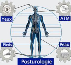 Question concernant la formation posturologie du Dr Bricot