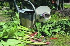Természetes permetlevek és növénytársítások kertből, mezőről
