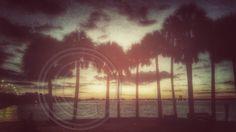 Bay Evening Palms
