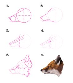 How to draw a red fox's head from profile view.