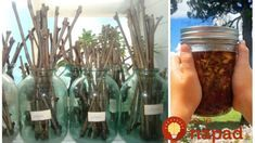 potrebujete je 15 až 20 vetvičiek akejkoľvek odrody vŕby a nádoba s vodou. Garden Inspiration, Mason Jars, Glass Vase, Alcoholic Drinks, Flora, Gardening, Plants, Pump, Janus