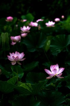 the glow of the flower blooms in the darkness of the night