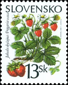 Forest Fruits, Wild Strawberries, Strawberry Fields, Vintage Stamps, Flower Fairies, Stamp Collecting, Graphic Art, Illustration, Crafts