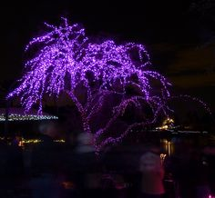 Purple/lavender by bulldog008, via Flickr
