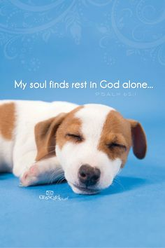 Rest is found in God alone!