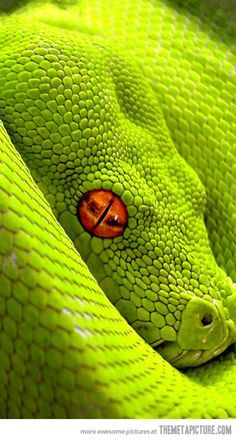 The snake of Sauron.... its like Harry Potter and Lord of the Rings combined