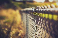 Golden Light Fence [hff] #fence #photography #bokeh