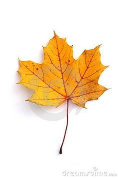 Lisc jesienny 5