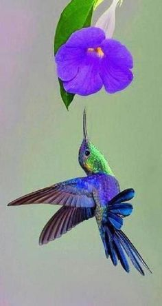 Blue Flower and the Hummingbird