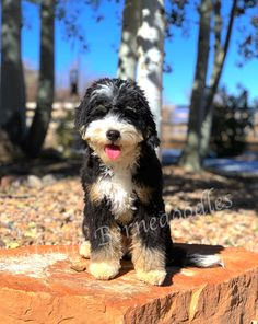 63 Best Dogs Images Dogs Dog Houses Dog Rooms