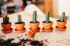 Grafted Cactus, Cactus Plants, Milwaukee, Farm Gardens, Grow Lights, Flower Pictures, Succulents Garden, Houseplants, Planter Pots