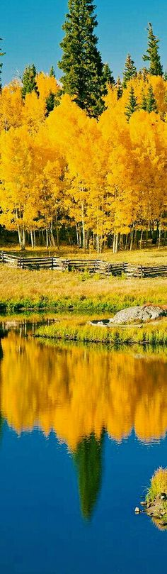 Reflection of Colorado in Autumn