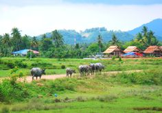 Rural Malaysia