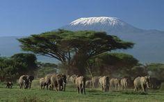 Amboseli National park.