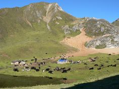 Grazing ground for Brokpa yaks. Arunachal Pradesh, First Home, Golf Courses, Community, World, The World, Starter Home