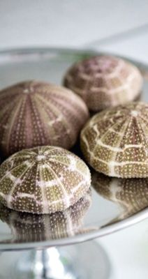 images about Sea urchins Sea Urchins, Shells