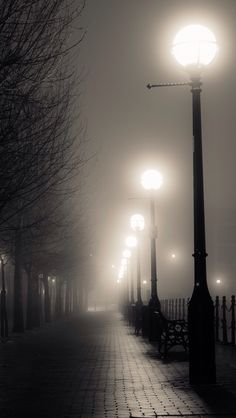 Cool misty weather, a beautiful time for a walk.