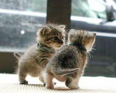 Tiny tots.
