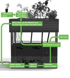 DIY Aquaponics Plans | DIY AQUAPONICS SYSTEM