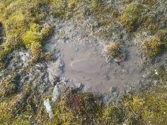 Muddy water with moss around it.