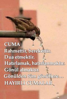 Cuma Allah, Religion, Messages, Quotes, Nice Asses, Lifestyle, Quotations, Qoutes, Texting