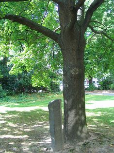7000 Oaks - Wikipedia, the free encyclopedia