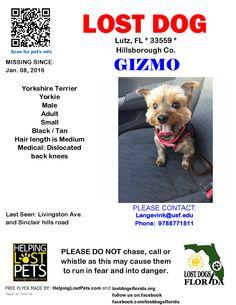 Lost Dog - Yorkshire Terrier Yorkie - Lutz, FL, United States