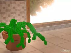 Imagen titulada Care for a Christmas Cactus Step 1