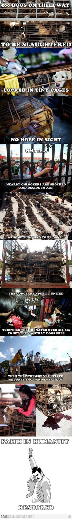 Stop the Dog Meat Trade!!! China has NO animal welfare laws!!!! Stray dog rescue #animalrights: Animal Rights, Animal Cruelty, Faith In Humanity Restored, Animal Abuse, Faith Restored, Faith In Humanity Dogs, Animalabuse, So Sad
